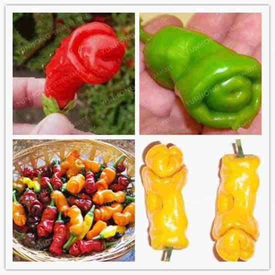 Перец Чили Купить семена на Aliexpress